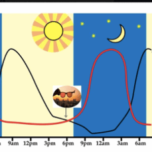 Sleep Cycle Bild