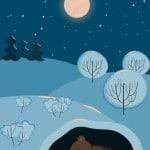 baer winterschlaf Bild