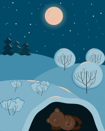 baer winterschlaf