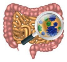 Das Mikrobiom – Dreh- und Angelpunkt der Gesundheit
