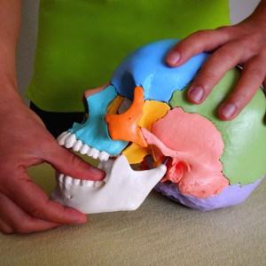 Craniosacrale Therapie / craniosale Osteopathie bei Gesichtsschmerzen, Kopfschmerzen, Migraene und Kieferschmerzen