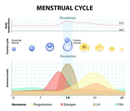 Zu hoher östrogenspiegel