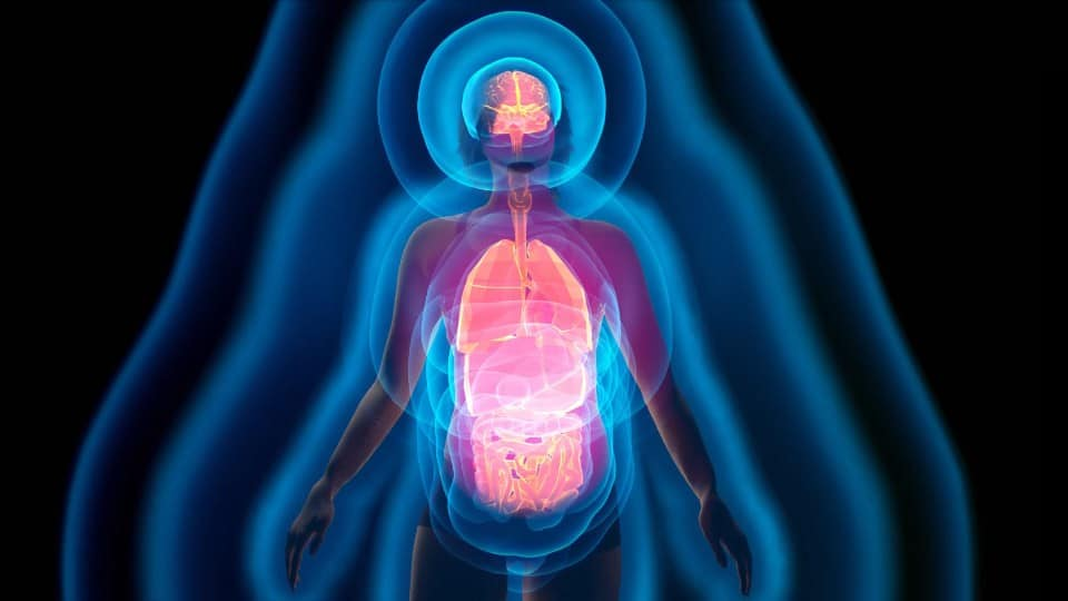 Vitalfeld_Bioresonanztherapie